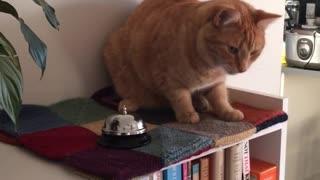 Smart cat rings bell for treats