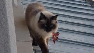 Kitty Brings Back Leaf as a Gift
