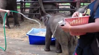 Baby elephant playing abbie and kiizie