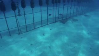 How Water Turtle Live Underwater