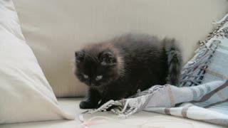 Cat hugs his blanket