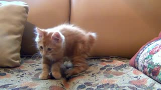 Cute little cat playing around