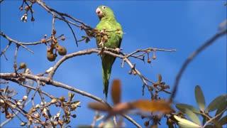parakeets wonderful pets