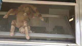 Cat Doesn't Like Being Inside