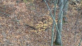 Deer Ohio Public Lands