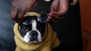 This Cute Dog Is Having FUN