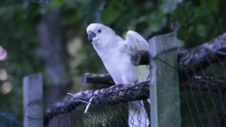 white parrot is training to start a new day