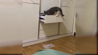 Must Watch Funny Cats