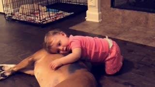 Baby girl preciously cuddles boxer best friend