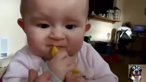 Cute babies eating lemon for the first time.