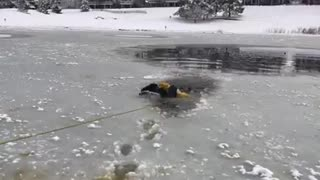 Firefighters rescue dog trapped in ice