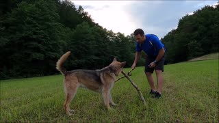 A Dog Grabbing Sticks With Its Mouth