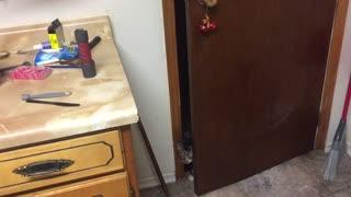 Cat Sneezes Loudly After Opening Door