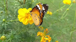 Very beautiful butterfly.
