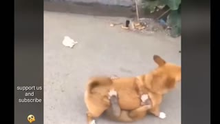 Watch how monkeys attach to dogs