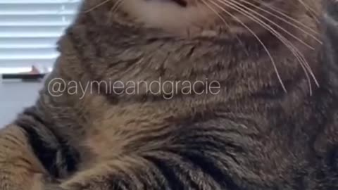 Daily cat video - 16