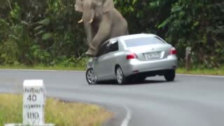 Angry elephant attacks people and destroys cars