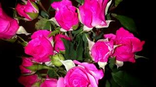 Flowers' world