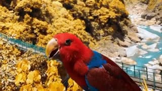 Fernanda parrot in nature with beautiful colors