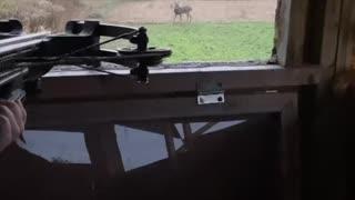 First Cross bow buck