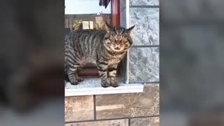 Cats Understanding