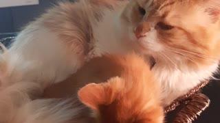 Gatos bonitos cariñosos
