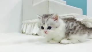 cute cat small lag