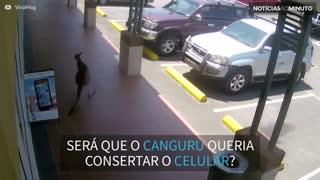 Canguru tenta entrar em loja na Austrália!