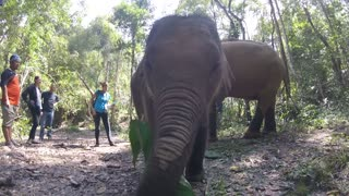 Hand Feeding A Baby Asian Elephant