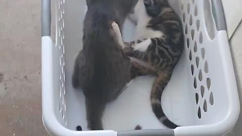Epic Shop Cat Battle