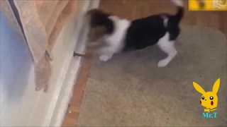 Dog playing with spring door stop