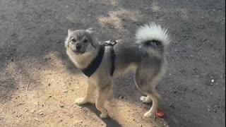 cute dog grooming after lockdown