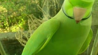 Beautiful parrot 🍃