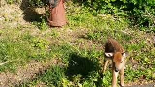 Baby Deer #wildlife
