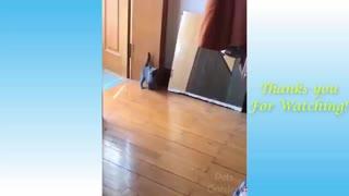 Cute Pets And Funny Anima
