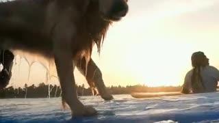 world animal surfing champion