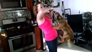 Puppy tug of war: Mommy Level