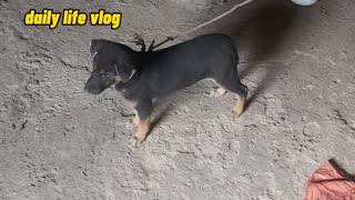 naughty dog | daily life vlog