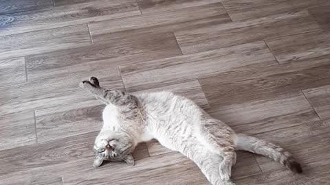 Deep sleep of a cat.