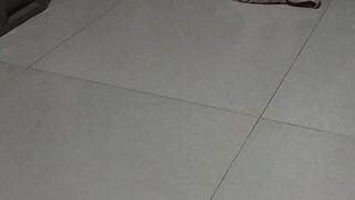 my pet husky broke our blanket🤣