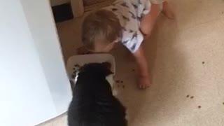 Baby hilariously imitates cat's eating habits
