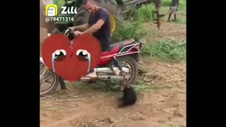 😂Funny monkey compilation😂 cute monkey and dog video.funny monkey doing stupid things🤣🤣