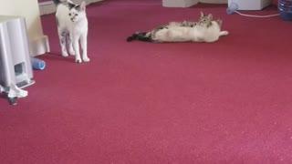 Kitty Dinner time rush