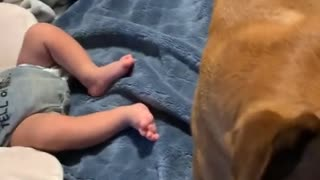 Very Protective Puppy Dog Protects Baby