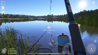 Russian Fishing 4 Sura River Wild Carp 7.989 Kg