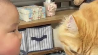Cat tries to kiss a baby