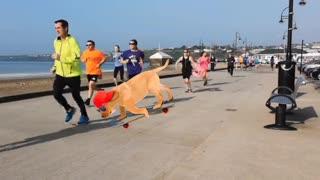 running dog cão