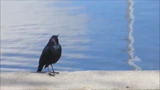 chirping bird with real sound