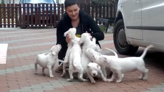 Cute Puppies Attack Compilation