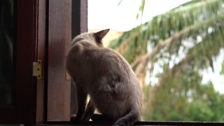 A Cat Resting On A Window Sill